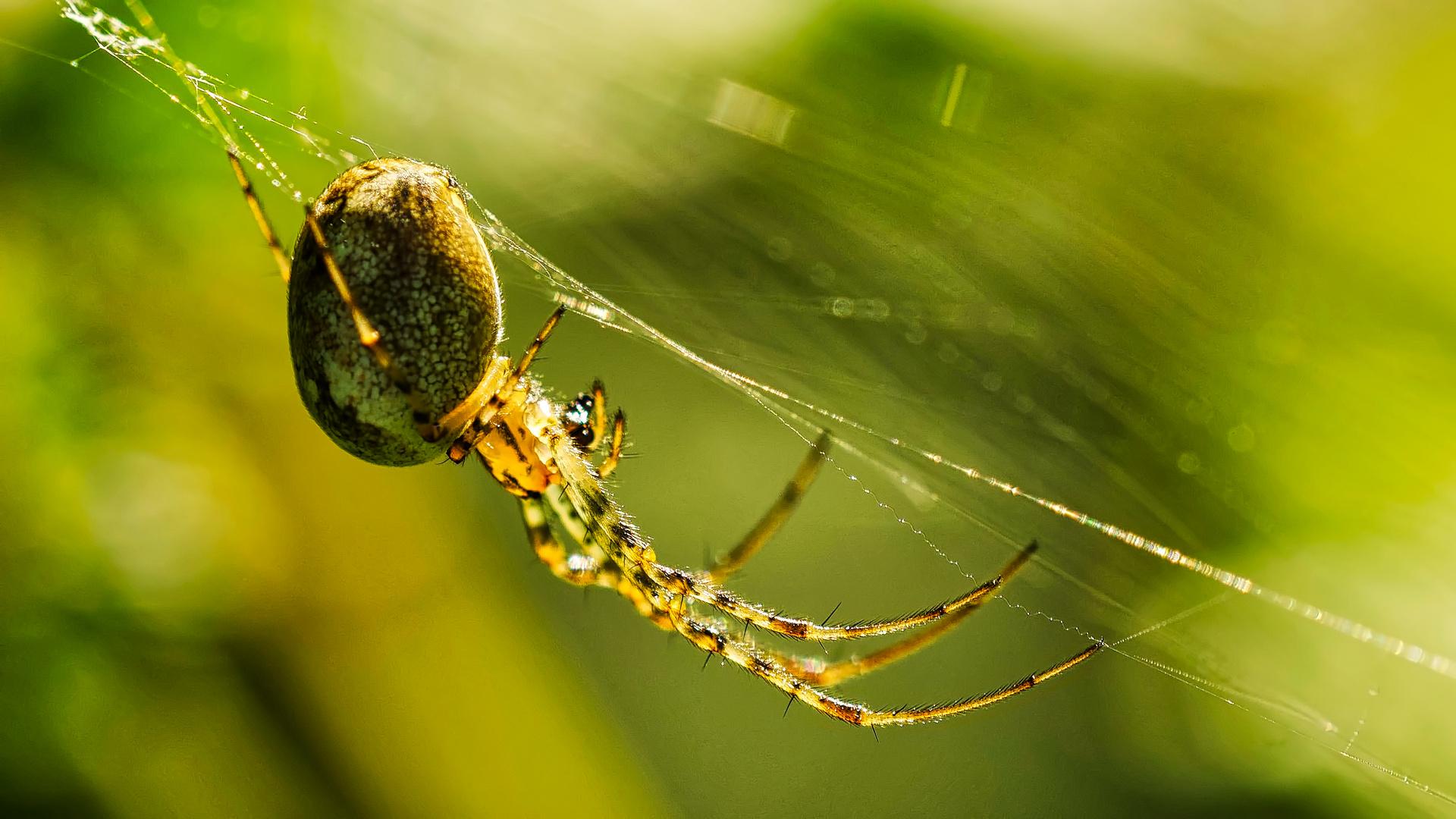 Gliedertiere (Arthropoda)