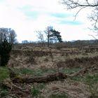 Glimmen - Forest Appelbergen - 3