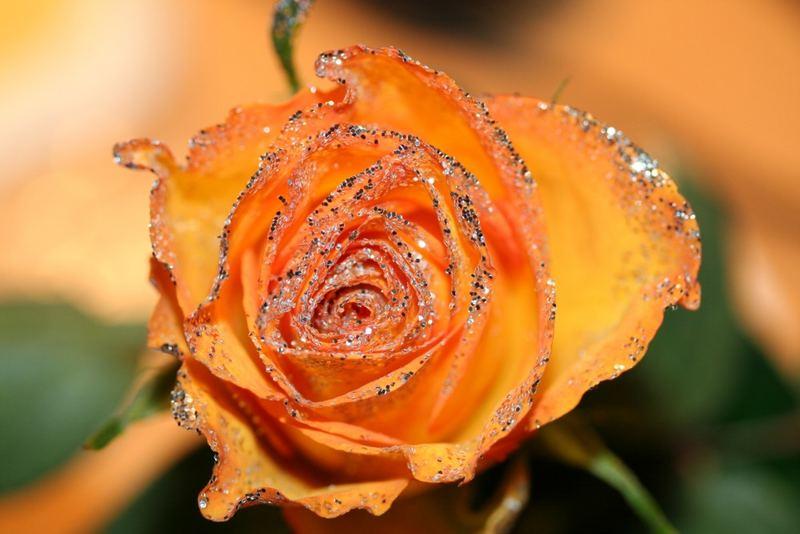 Glitterrose