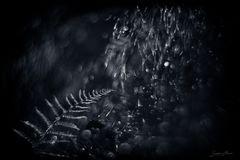 Glitzern im Wald