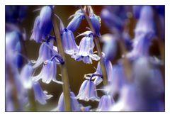 Glocken läuten den Frühling ein