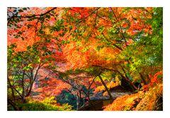 Glowing autumn