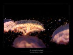 Glowing Jelly Fish
