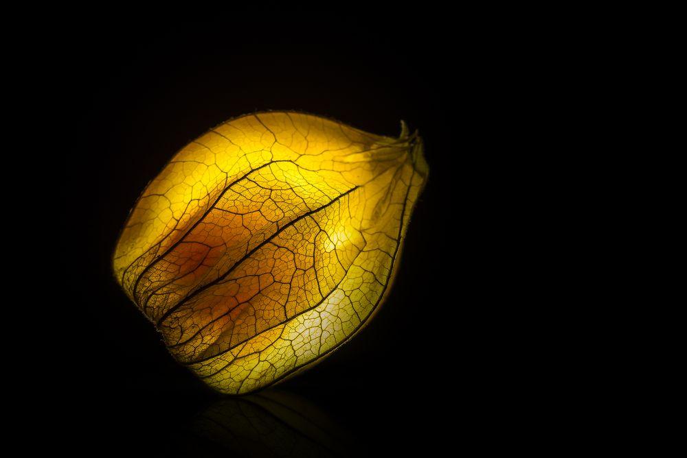 glowing Physalis