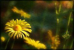 Glowing summergarden