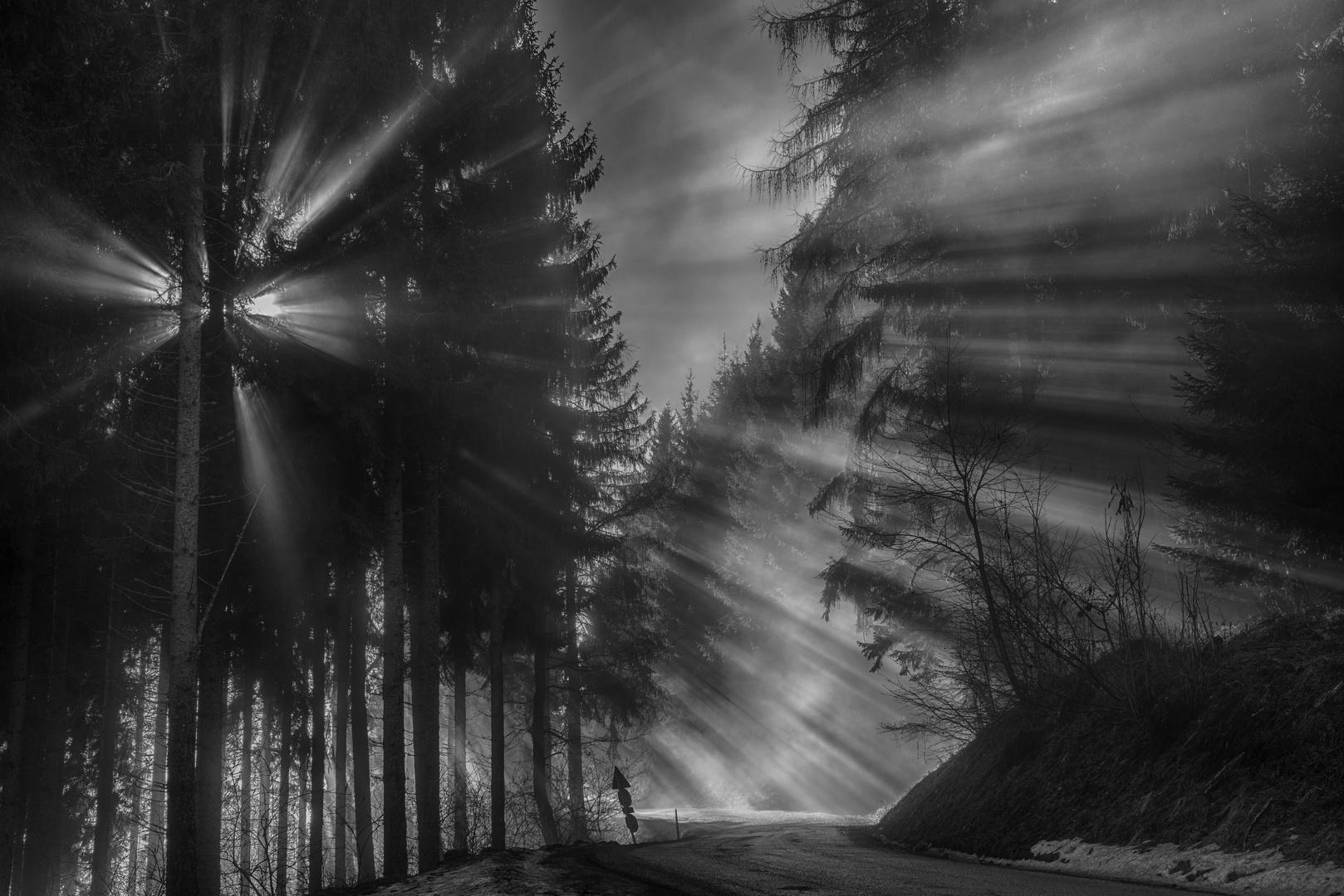 glowing tree III