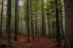 Glucken und Stachelbart-Wald