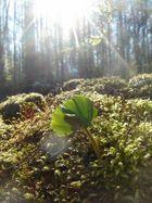 Glück in der Sonne