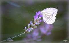 Glück ist wie ein schöner Schmetterling
