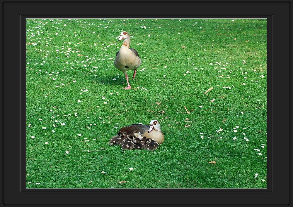 Glückliche Familie # Familia feliz
