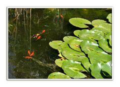 Glückliche Fische
