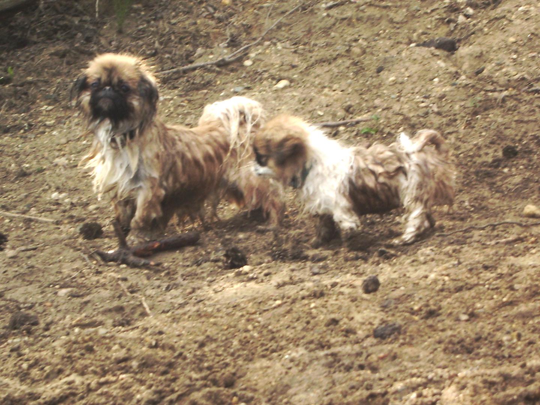 Glückliche Hunde