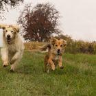 Glückliche Hunde ....