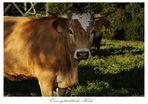 Glückliche Kuh