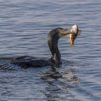 Glücklicher Fischfänger