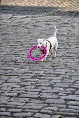 Glücklicher Hund!