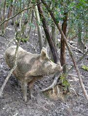 ... glückliches Schwein ...