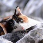 Glückskatze Lyra grüßt Euch mit Blick auf 2014