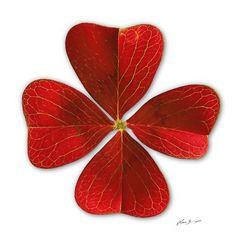 Glücksklee als rotes Gemälde