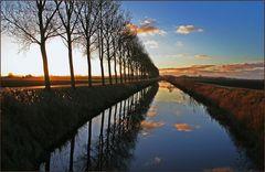 Glühendes Schilf am Kanal