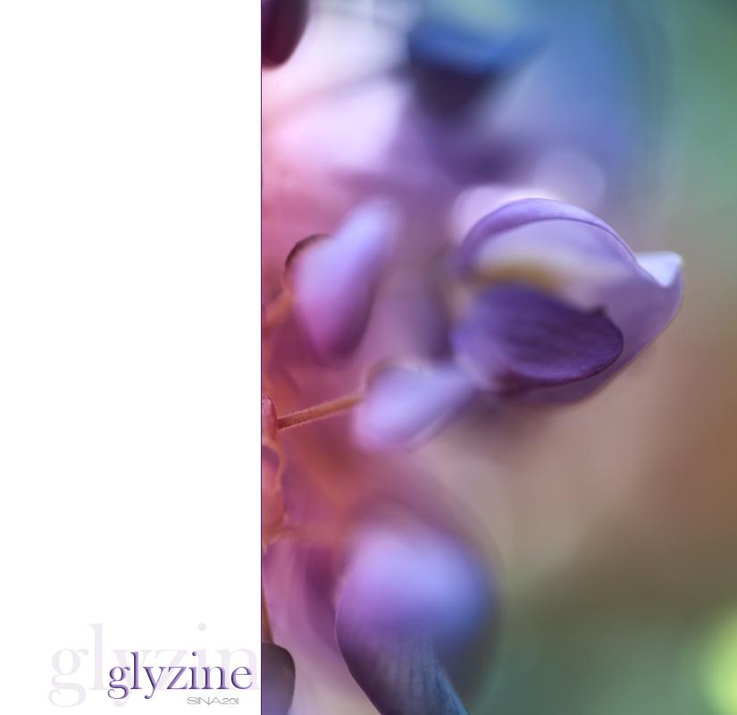 glyzine
