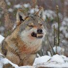"""Gmork der Werwolf aus """"Die unendliche Geschichte"""""""