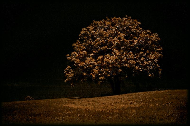 ~ gnarled tree ~