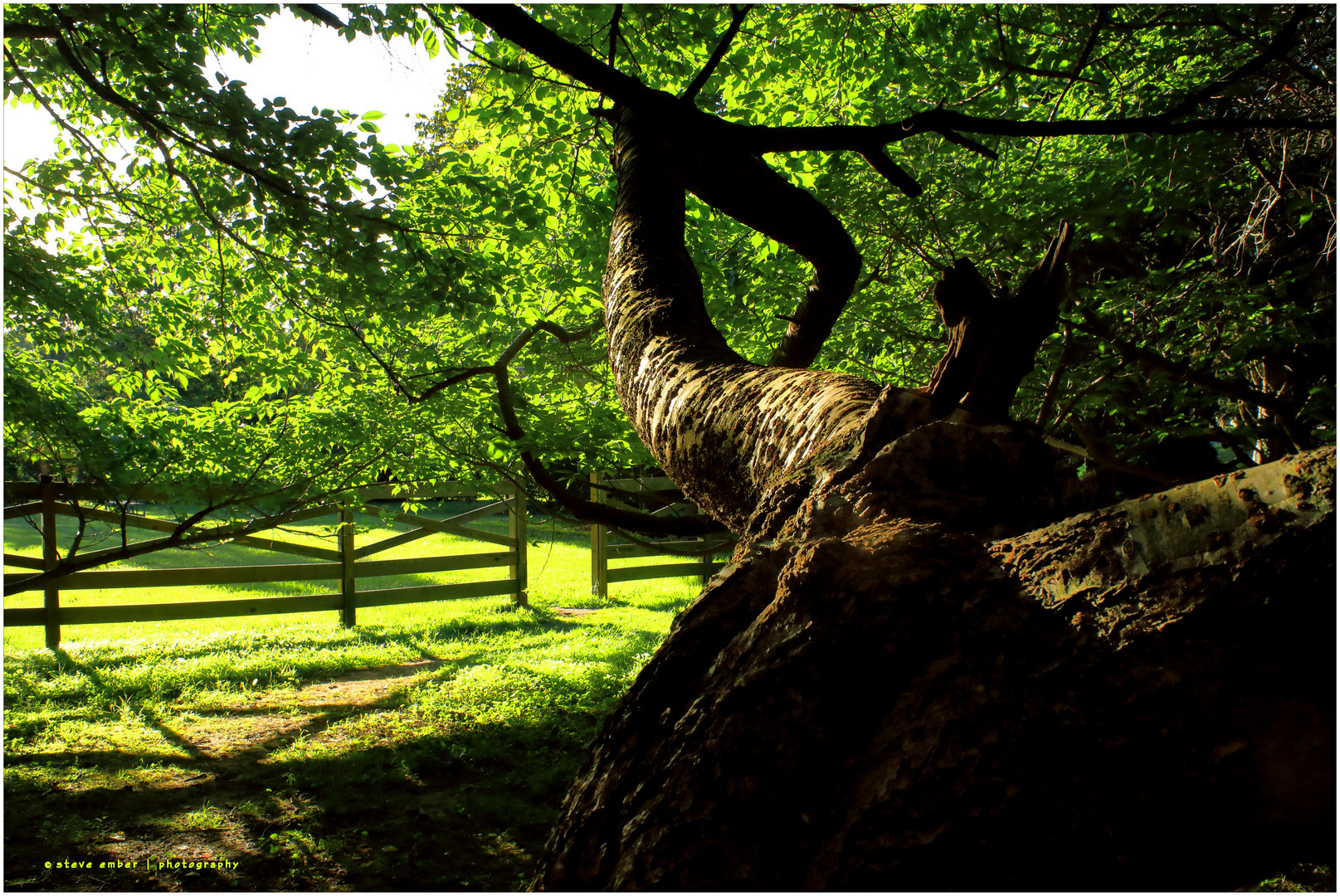 Gnarled Tree and Rustic Fence in Golden Hour