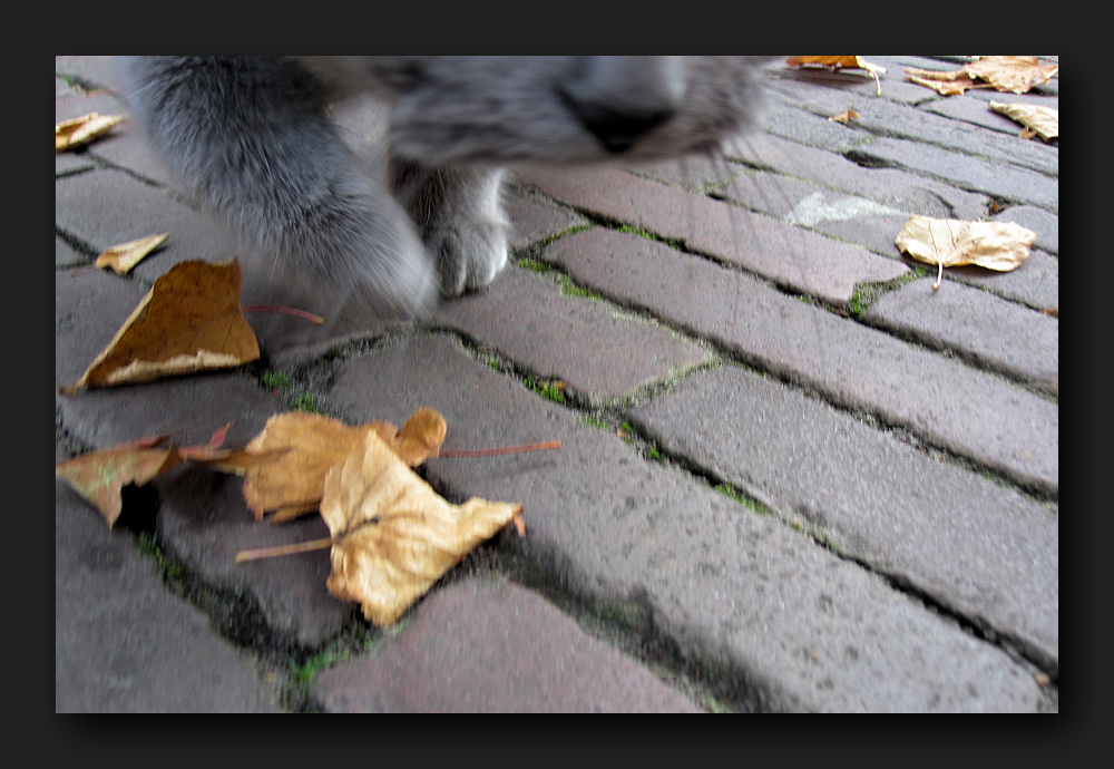Go slowly, the leaves rustling under my feet ...
