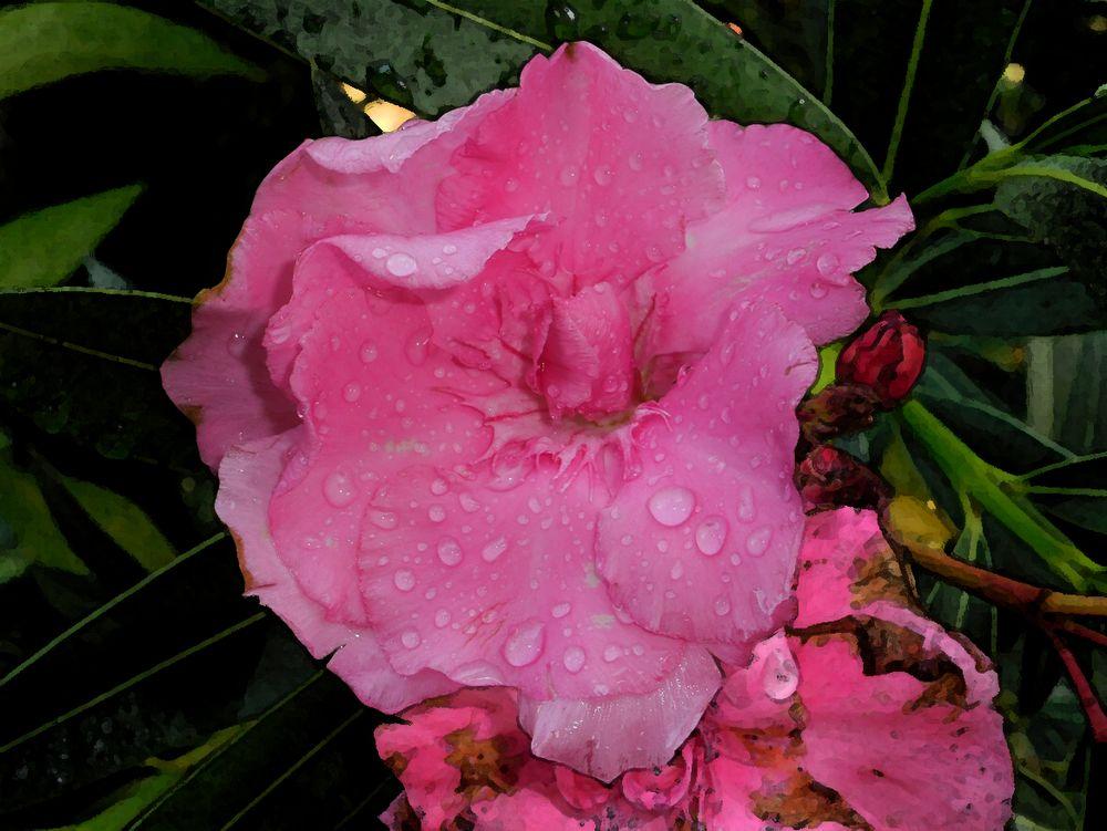 gocce di pioggia oleandro