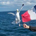 goéland chapardeur !!