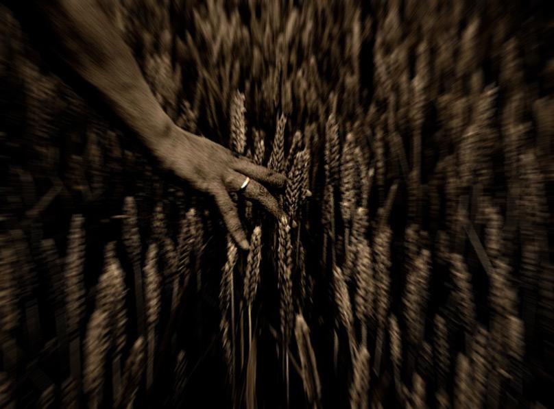 Göttergabe Weizen