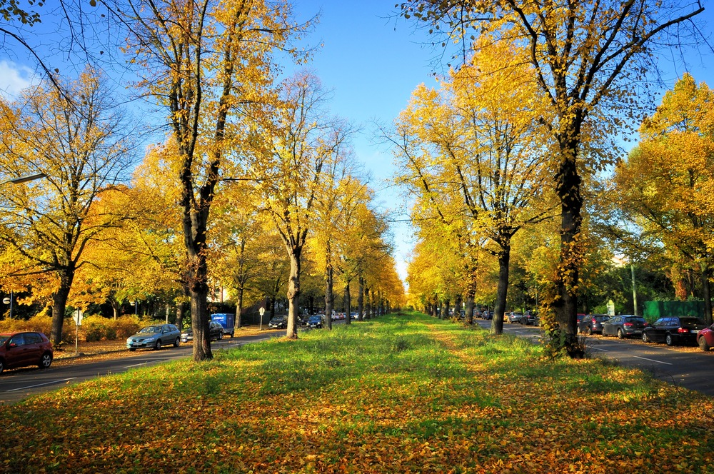 """""""Gold-Allee""""...."""