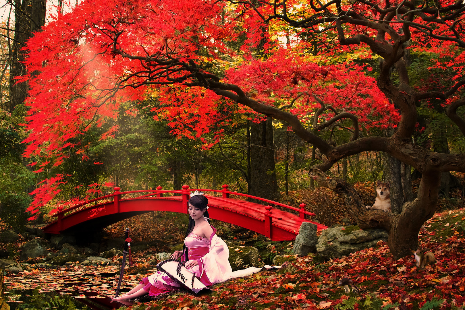Gold and Red Autumn floating in the Koto Music