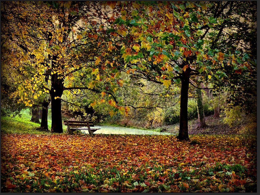 Gold autumn
