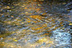 """""""Gold"""" in der """"Us"""" DSC 0295"""