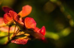 Goldahorn im Morgenlicht