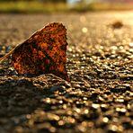 Golden Autumn II