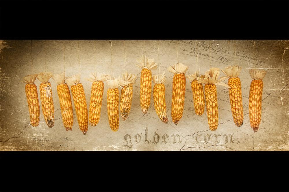 Golden corn.