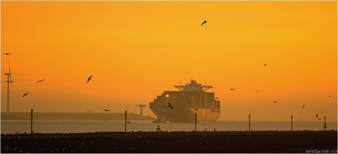 Golden Dust. / Maasmond / Rotterdam