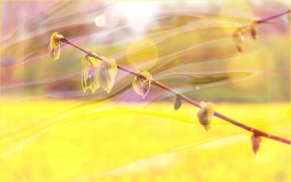 golden °°||| fields