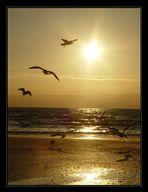 Golden Flight...