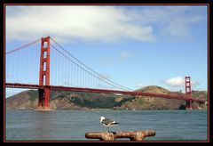 Golden Gate Bridge mit Möwe
