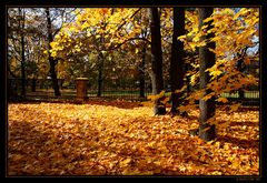 ~ golden leaves ~