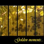Golden moments...