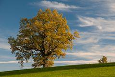 Golden Oak-tober