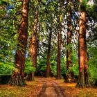 Golden Path of Autumn