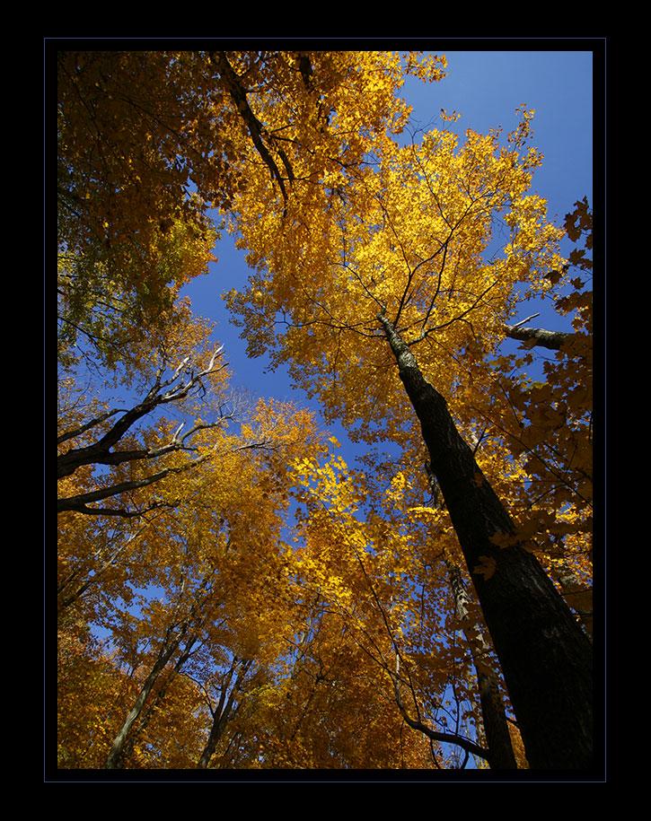 Golden perspective...