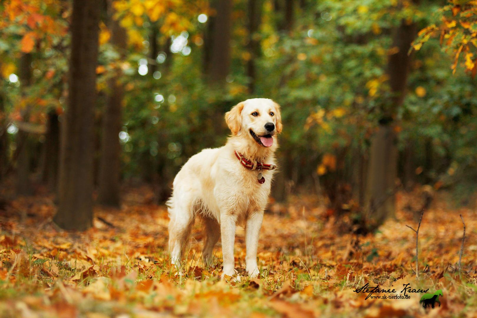 hund und natur