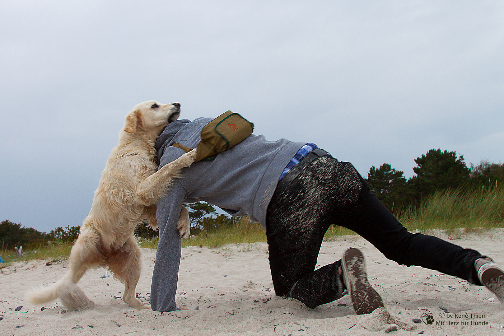 Golden Retriever vs. Mensch
